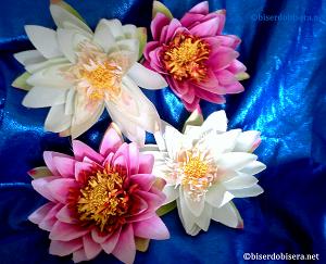 lotos_beli-roze_-Png.png